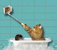 Kot z telefonem w łazience obraz stock