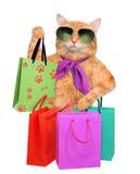 Kot z torba na zakupy Zdjęcie Royalty Free