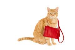 Kot z torebką Zdjęcie Royalty Free