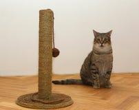 Kot z zabawką Fotografia Stock