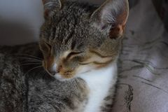 Kot z zamkniętymi oczami obraz royalty free