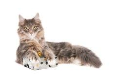 Kot z zawijającym prezentem fotografia royalty free