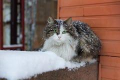 Kot z zielonymi oczami na śniegu Obrazy Royalty Free