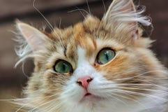 kot zaskakujący fotografia royalty free