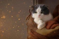 Kot zawijał up ciepłego w kratkę szkockiej kraty obsiadanie na nadokiennym parapecie fotografia royalty free