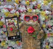 Kot zrobił selfie z różą zdjęcia stock