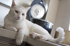 kota łasowania kuchnia Zdjęcia Royalty Free