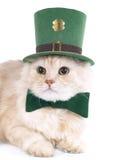 kota śmietankowy dzień Patrick s st Obraz Royalty Free