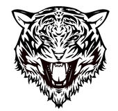kota agresywny tygrys Fotografia Stock