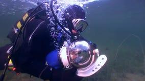 Kota akwalungu nurek na tle podwodnym odbicia światło słoneczne zbiory wideo