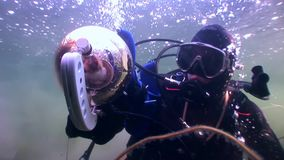 Kota akwalungu nurek na tle podwodnym odbicia światło słoneczne zbiory