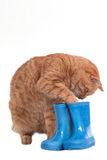 kota bawić się Fotografia Stock
