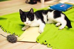 kota bawić się domowy Obrazy Stock