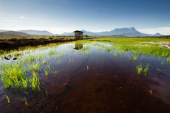 Kota Belud Paddy Field Photographie stock