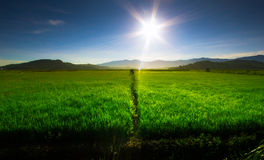 Kota Belud Paddy Field Stock Image