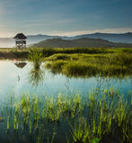 Kota Belud Paddy Field Royalty Free Stock Photos