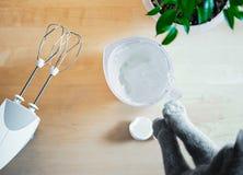 Kota biczowania biel jajka dla torta doskonalić szczyty podczas gdy jego właściciel jest oddalony zdjęcia royalty free