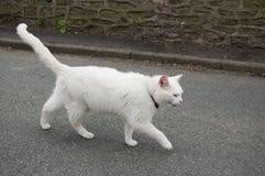 kota biel Obrazy Stock
