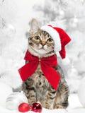 kota bożych narodzeń ilustracyjna kiciuni śniegu płatka śniegu zima zdjęcia royalty free