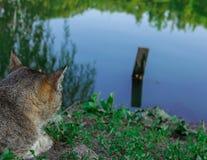 Kota czekanie dla ryba Obraz Royalty Free