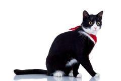 kota czerwieni szalik Fotografia Royalty Free