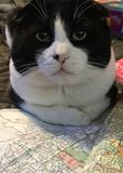 Kota czytania mapa obraz royalty free