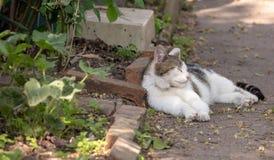 Kota dosypianie na ścieżce w ogródzie Zdjęcia Royalty Free