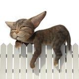 Kota dosypianie na ogrodzeniu ilustracji