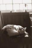 Kota dosypianie w rocznika kraju wewnętrznej retro fotografii Zdjęcie Royalty Free