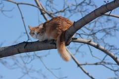 kota drzewo Zdjęcia Stock