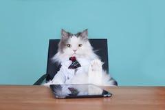 Kota duży szef w biurze Zdjęcie Stock