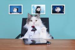 Kota duży szef w biurze Zdjęcia Royalty Free