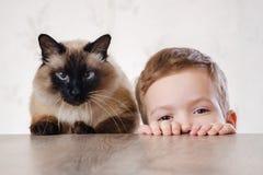 Kota dziecka balijczyk wpólnie bawić się Zwierzę śliczny obrazy royalty free