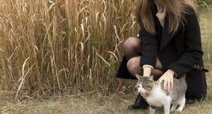 kota dziewczyny uderzanie obraz royalty free