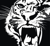 kota dziki kierowniczy Obrazy Royalty Free