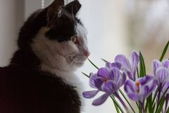 10 kota eps kwiatów ilustraci wektor Obraz Stock