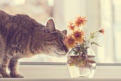 10 kota eps kwiatów ilustraci wektor Zdjęcia Royalty Free