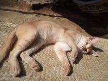 kota głowy dom zdjęcia royalty free