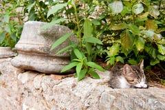 kota grka bezpański Obrazy Royalty Free