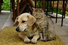 Kota i psa hol wpólnie jako najlepsi przyjaciele fotografia royalty free