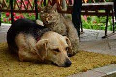 Kota i psa hol wpólnie jako najlepsi przyjaciele zdjęcie stock