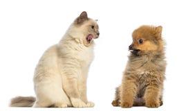 Kota i psa obsiadanie i patrzeć each inny Fotografia Royalty Free