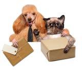 Kota i psa poczta doręczeniowy pudełko Zdjęcia Stock