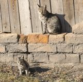 kota ilustracyjny figlarki wektor Zdjęcie Stock