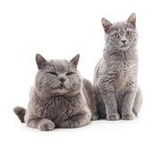 kota ilustracyjny figlarki wektor Zdjęcia Royalty Free