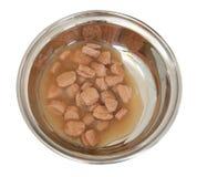 kota jedzenia świeży sos Fotografia Royalty Free