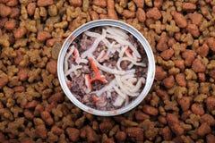 kota jedzenie Obraz Royalty Free