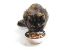 kota jedzenie Zdjęcie Stock