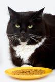 kota jedzenie jego Zdjęcia Royalty Free