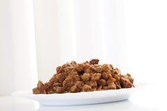 Kota jedzenie na talerzu Zdjęcie Royalty Free